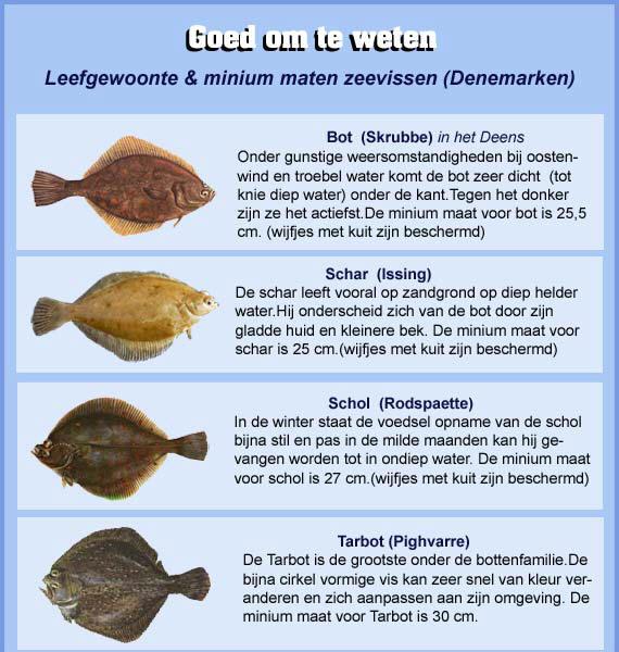 maten-zeevissen-dk-1